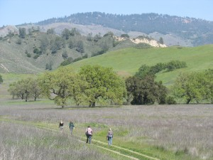 Sedgwick Reserve in the Santa Ynez Valley