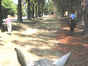 Horse and rider at Modoc Preserve