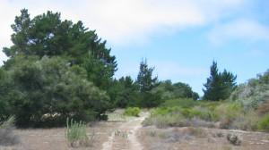 Burton Ranch Preserve