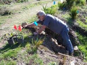 planting 3 volunteer