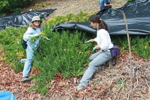 Invasive Plant Removal reduced