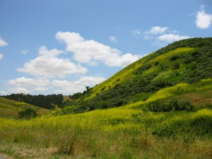 Hill at La Purisima Ranch