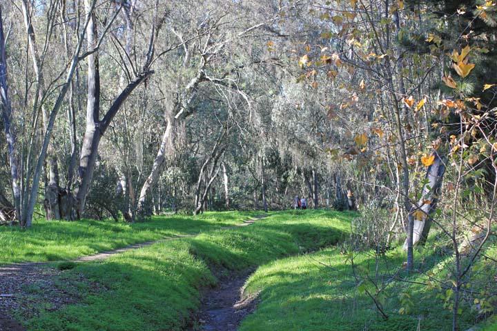 Trail through the woods x Jan 2013