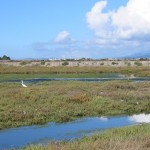 Carpinteria Wetlands