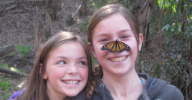 Monarch Butterflies Have Arrived!