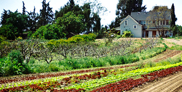 Lunch & Learn | The Land Trust for Santa Barbara County