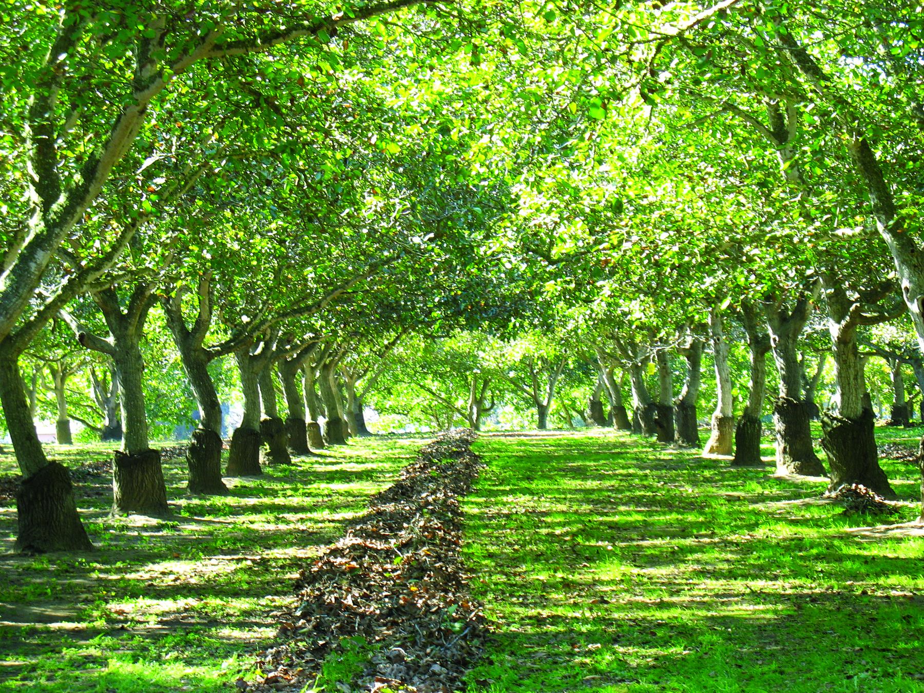 Grove At Hibbits Ranch