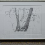 Arroyo Hondo Sycamores by Susan Petty, graphite 26x37.5, $2500