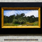 Mother Oak by Dale Howard, photograph 6x12, $300