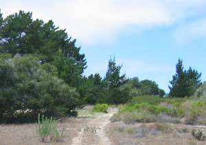 burton-ranch