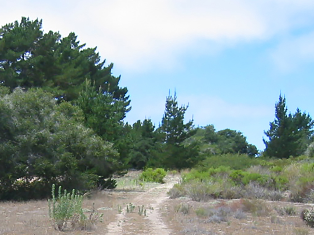 Burton Ranch Preserve