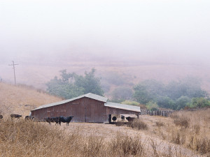 Freeman Barn