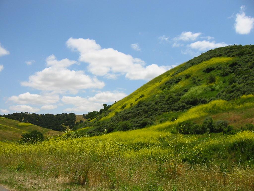 purisima hill
