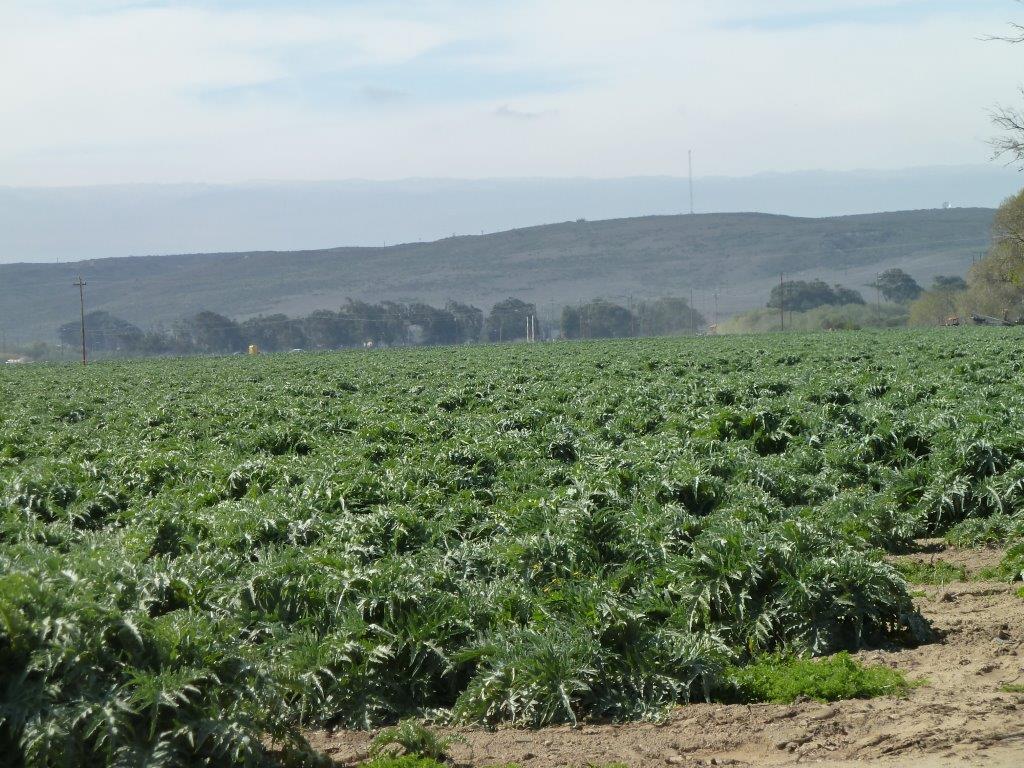 Jordan Farms