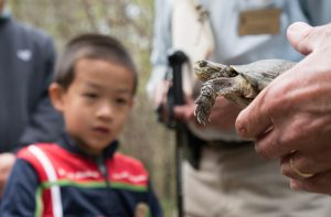 Kid with pond turtle