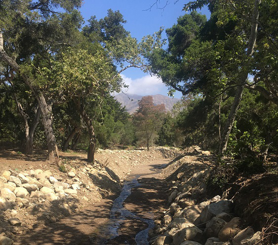 Bringing The San Ysidro Oak Woodland Back- Better Than Ever
