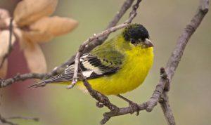 birders delight
