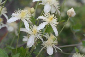 spring blooming flora Apr 2019