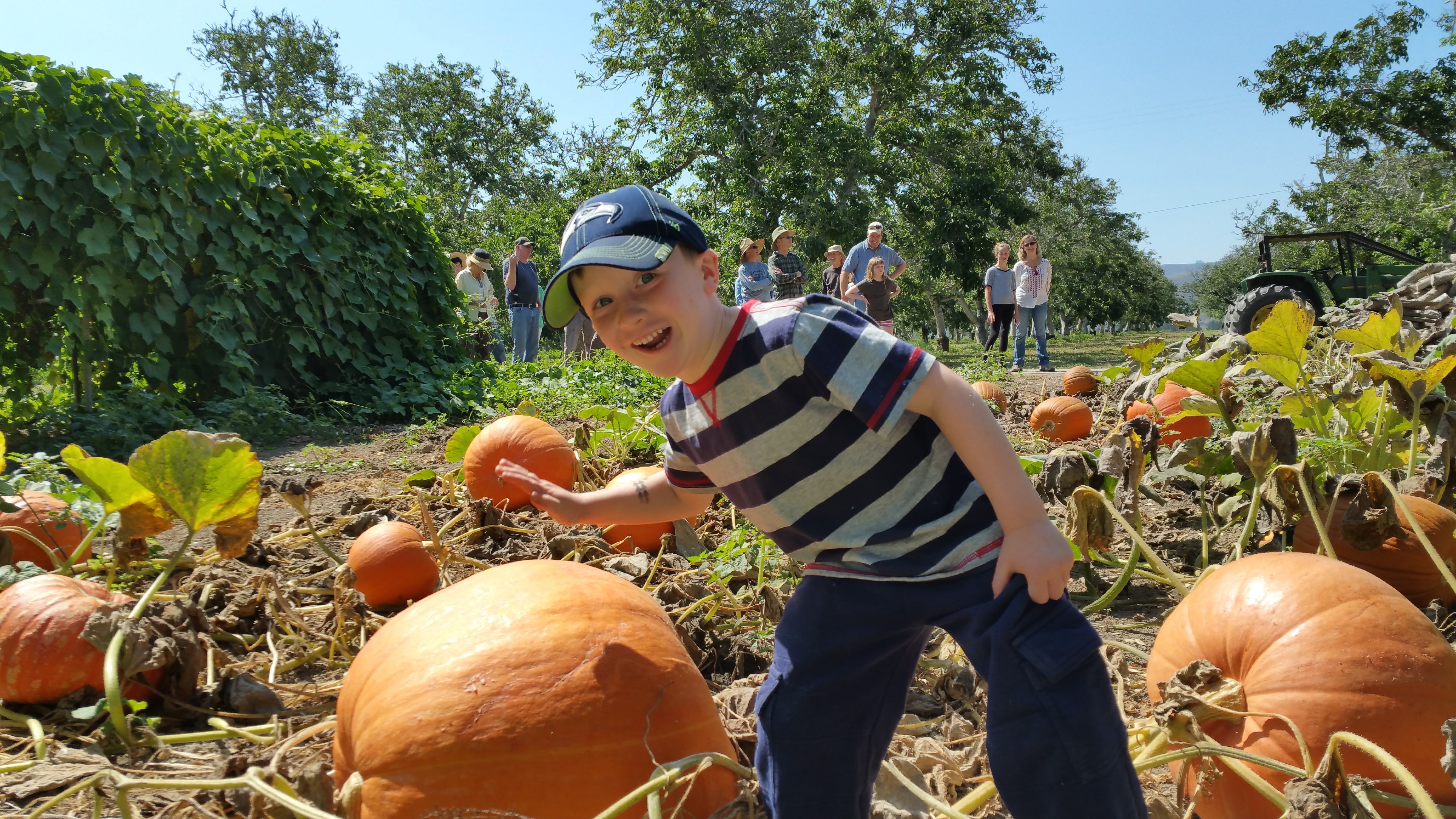 Charlie_Pumpkin_Hibbits