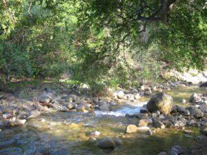 AHP creek_Jan.05
